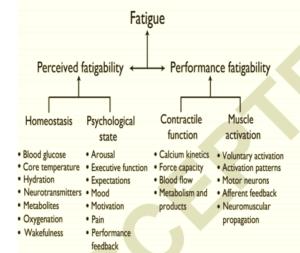 perceived fatigability and performance fatigability